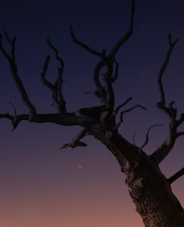A desert tree, seen from below, stretches its branches into the sky.